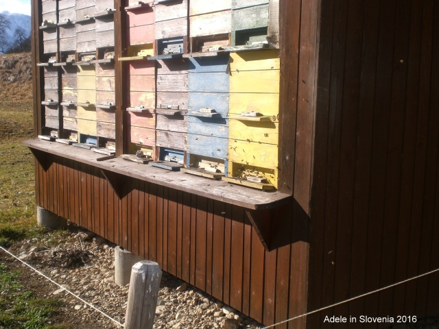 Bees S.Vas 5.2.2016-001