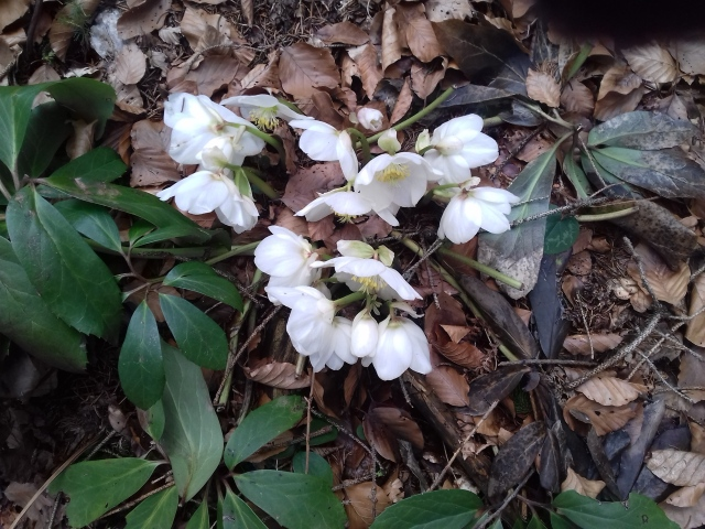 pomlad-3-3-2017